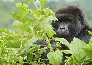 Rwanda Travel Guide Essential Facts and Information