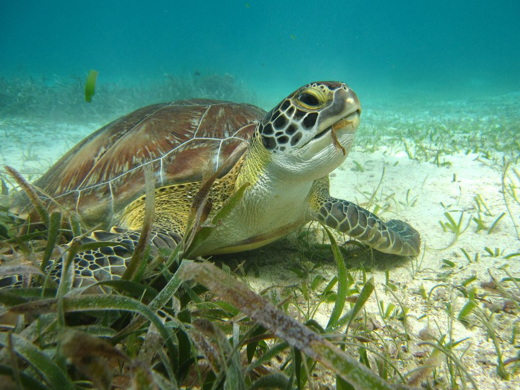 Sea turtle on ocean floor