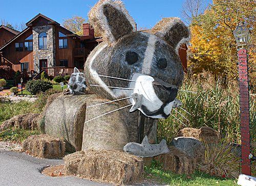 Foto de Killington Hay Festival - Mama Raccoon and Baby