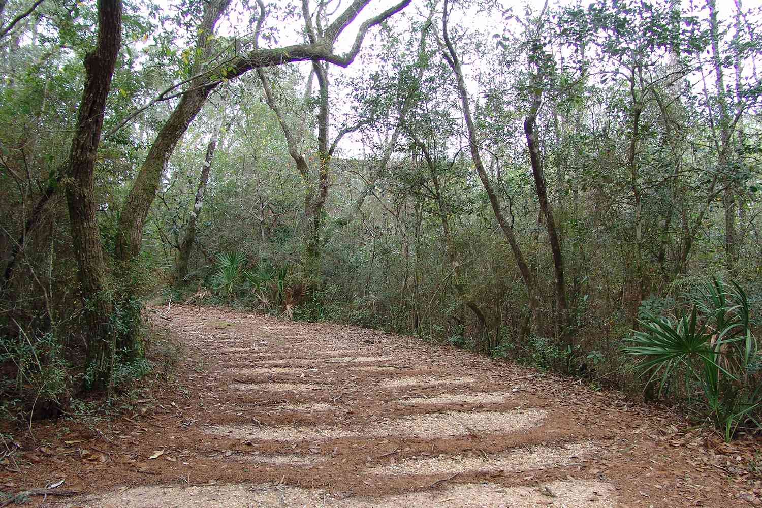 Trees along a path in Blackwater River State Forest in Florida