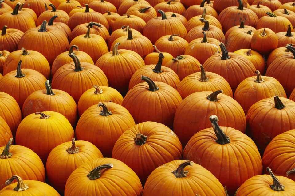 Where to find a pumpkin patch in San Jose and Silion Valley