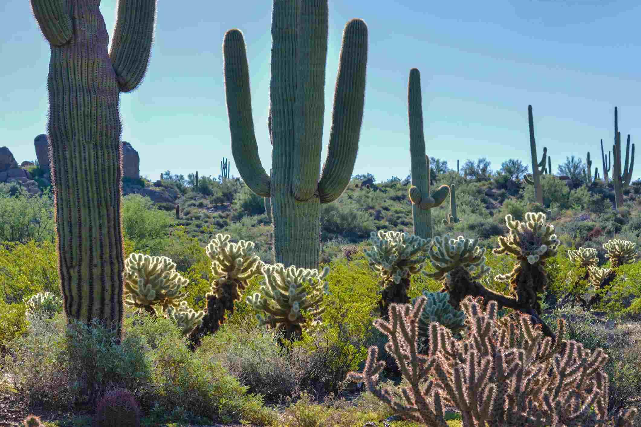 Brown's Ranch Trailhead, Scottsdale McDowell Sonoran Preserve