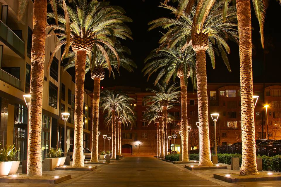 Palm Row in San Jose CA