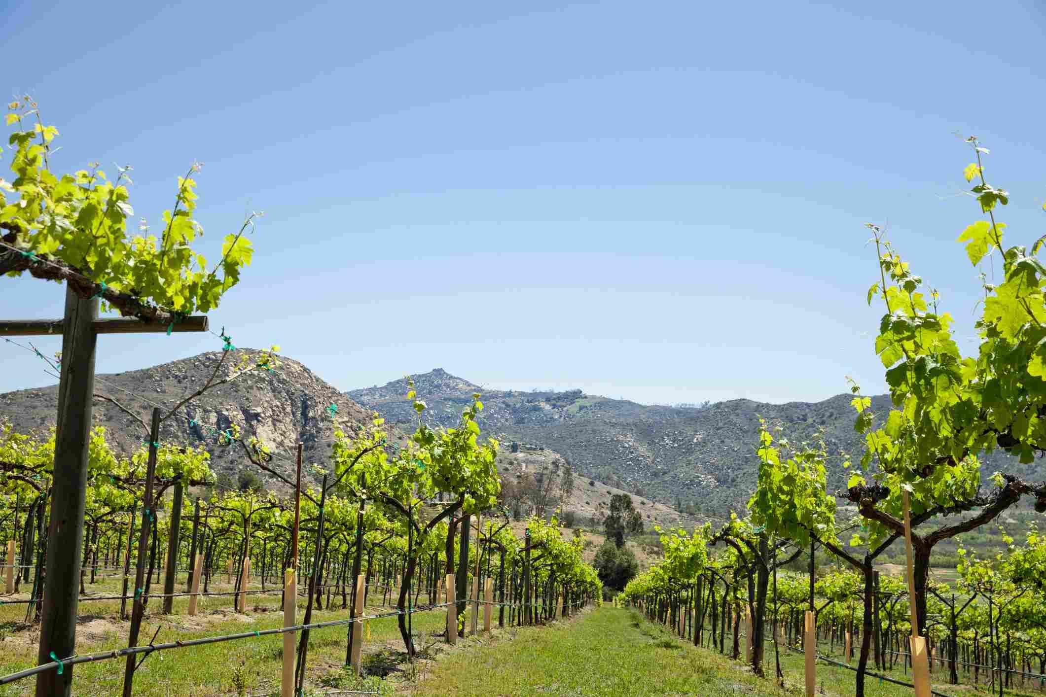 The Vineyard at Escondido