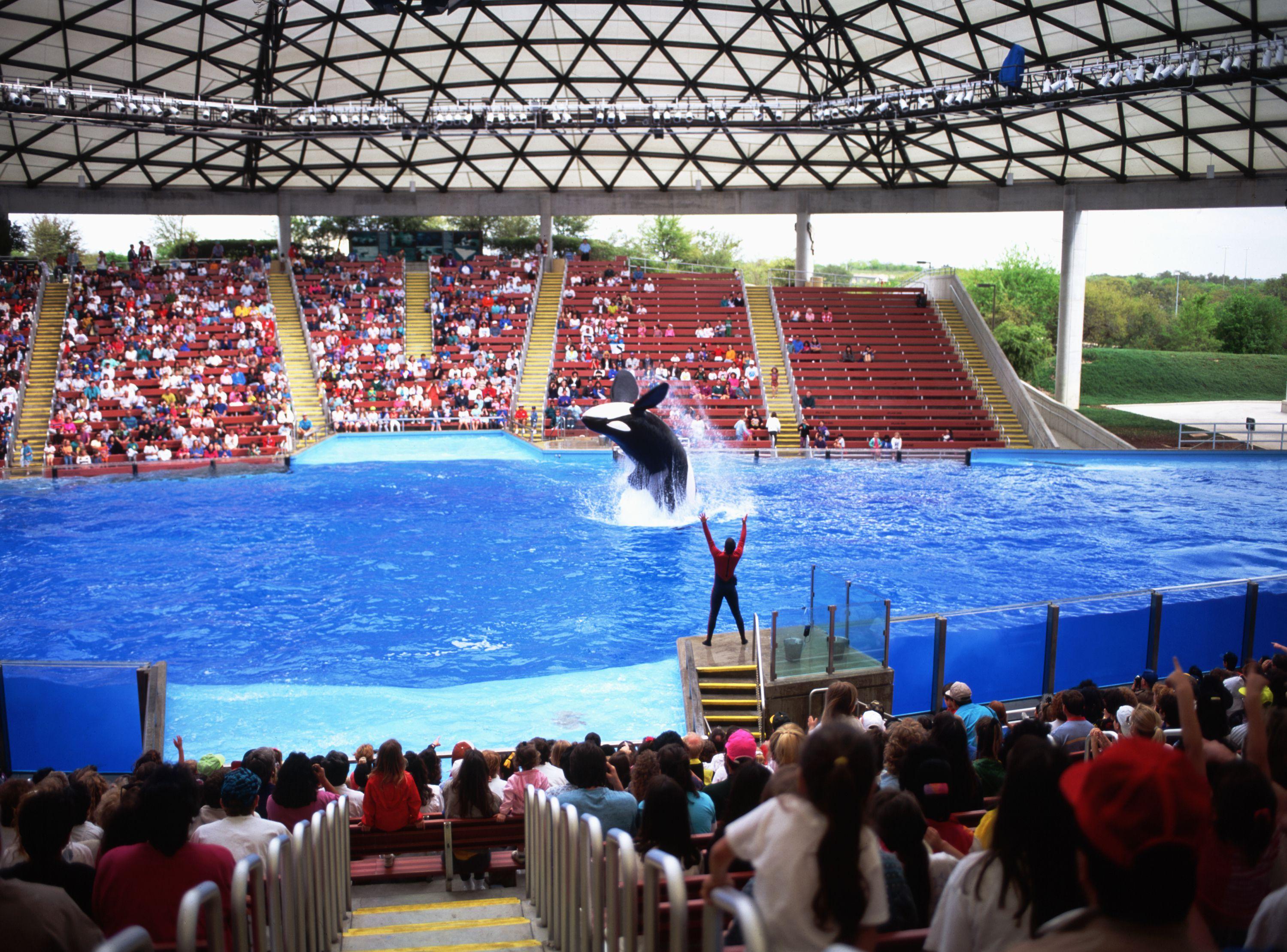 Killer whale show at San Antonio SeaWorld