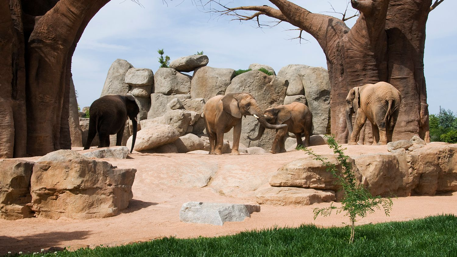 Information About The Detroit Zoo And Its Animals