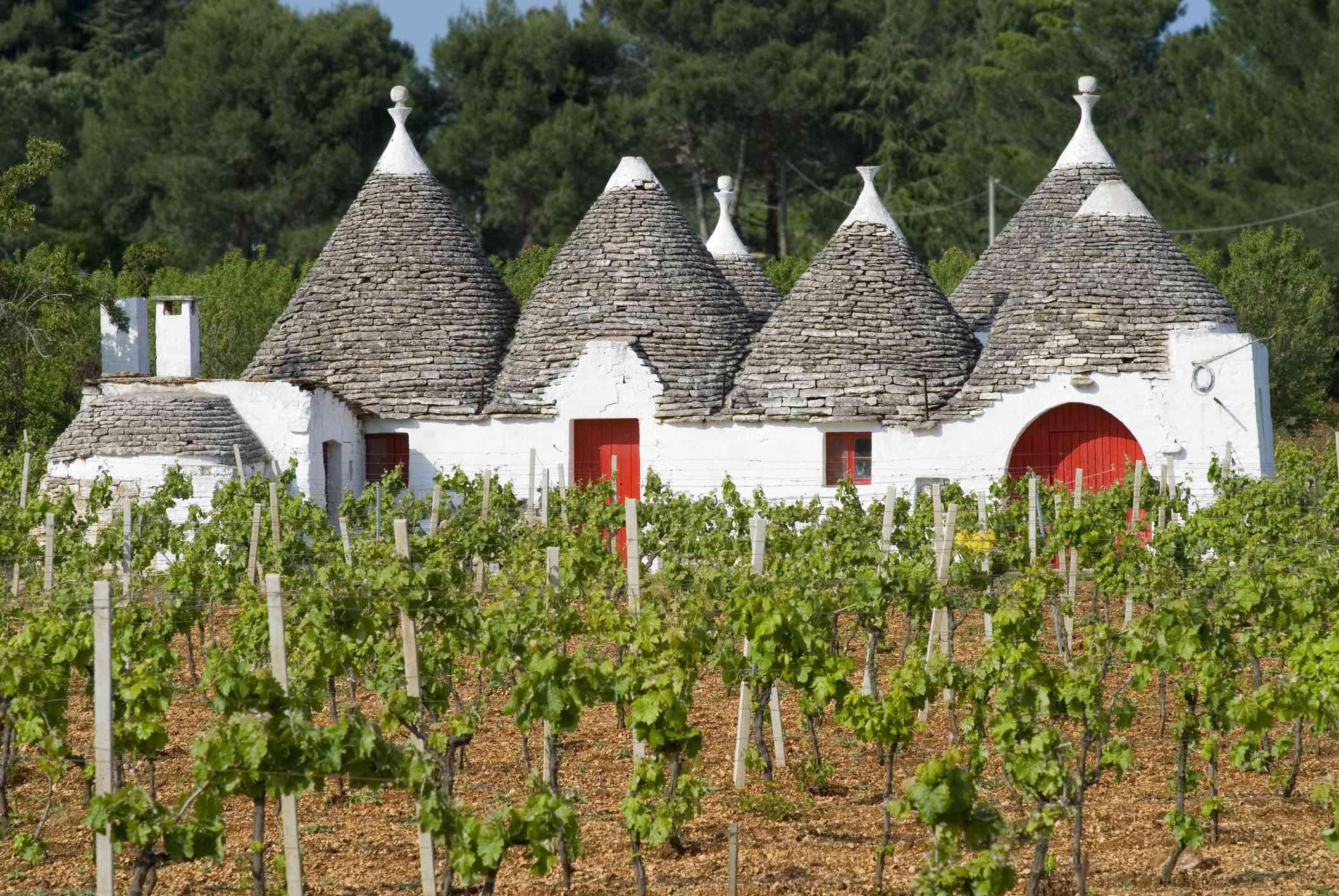 Trulli houses and grapevines near Alberobello, Puglia