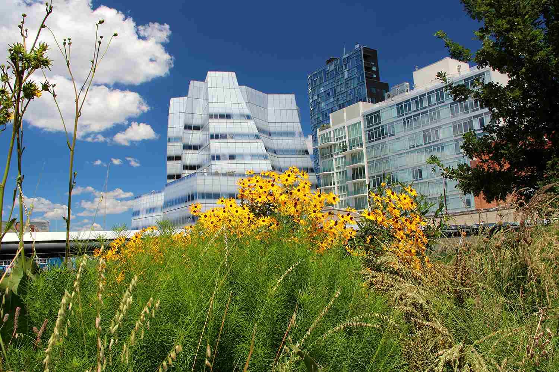 USA, NY, New York City, Manhattan, Chelsea, High Line Park's plants against modern building's in summertime