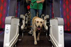 service dog on airplane