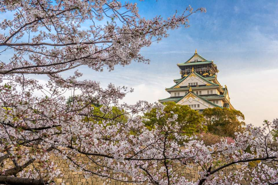 Osaka Castle with Cherry Blossom