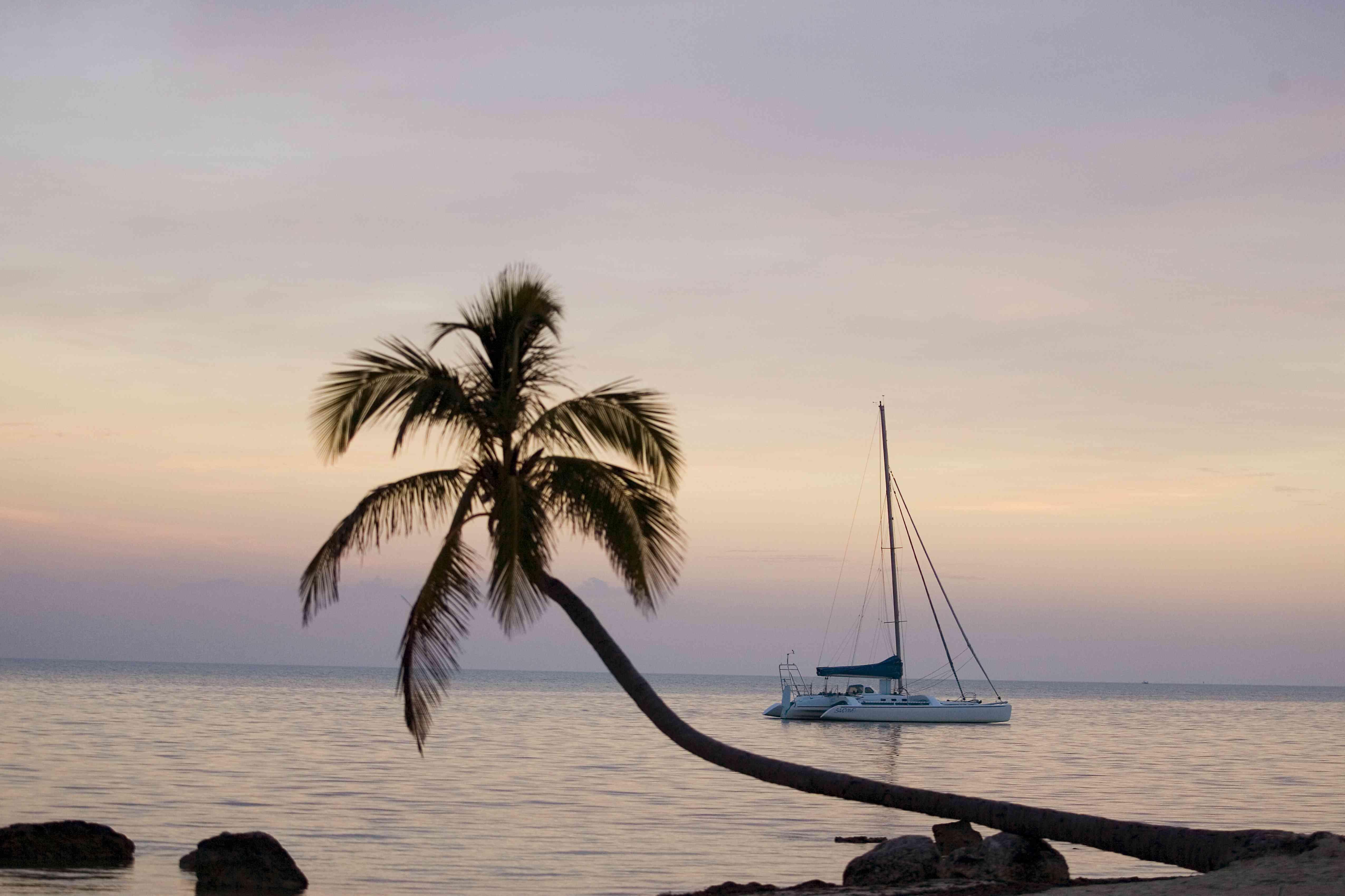 Palm tree in silhouette and sailboat behind it, Florida, Islamorada