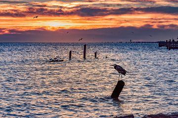 Una garza se sienta sobre una pila buscando peces mientras el sol sale sobre Seabrook, Texas, a lo largo de la costa del Golfo de Texas