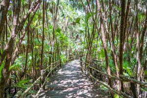 Bacab Jungle Park, Belize