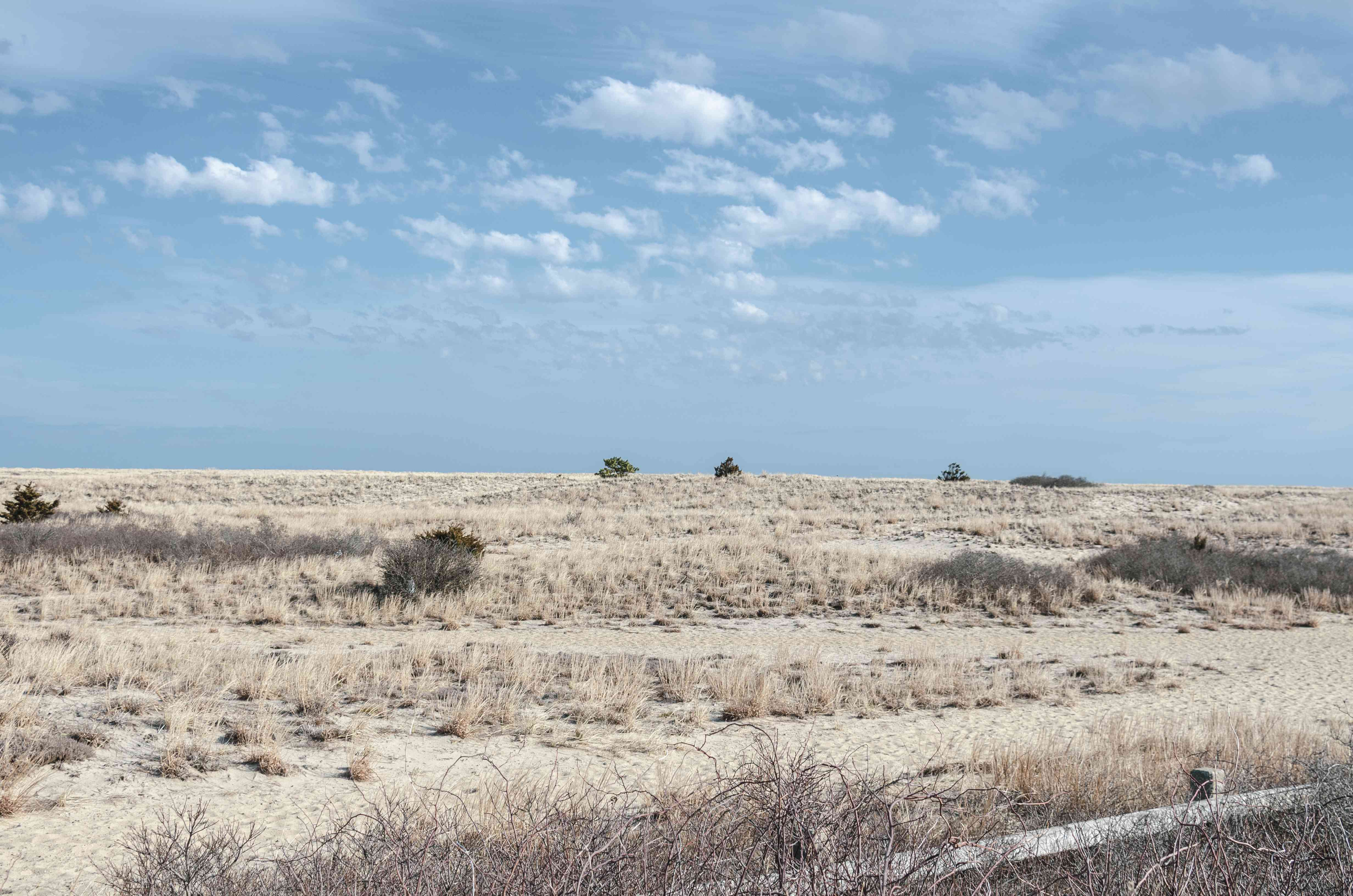 Sand dunes rising toward Cape Cod Bay on sunny morning at Scusset Beach State Reservation