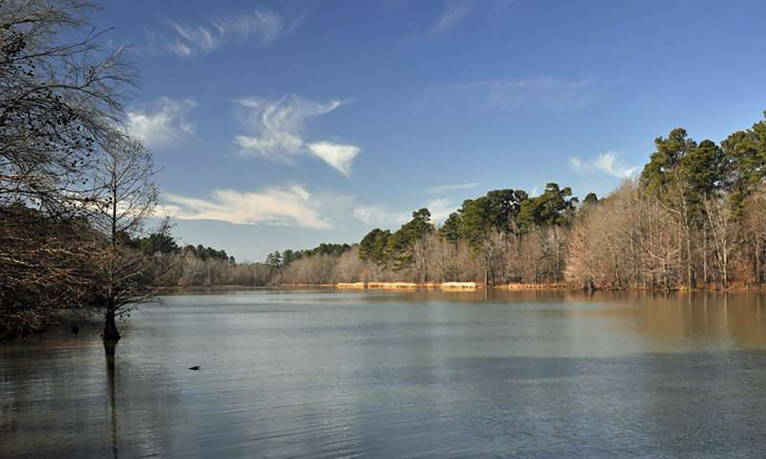 Best Camping Areas in Arkansas to Enjoy Nature
