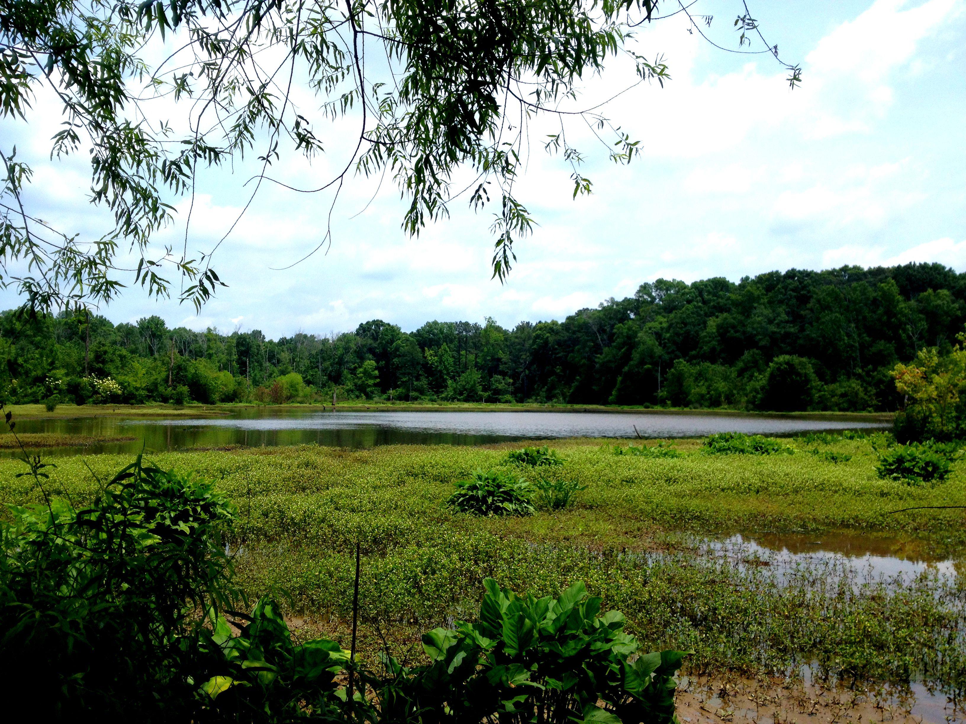 Constitution Lakes Park