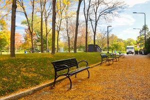 Fallen Leaves in University at Buffalo