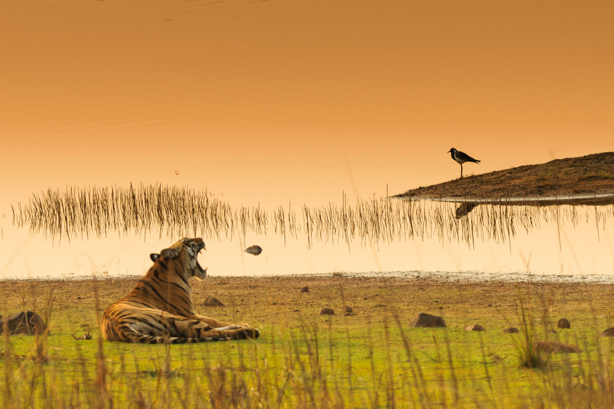 Tadoba National Park and Tiger Reserve Travel Guide
