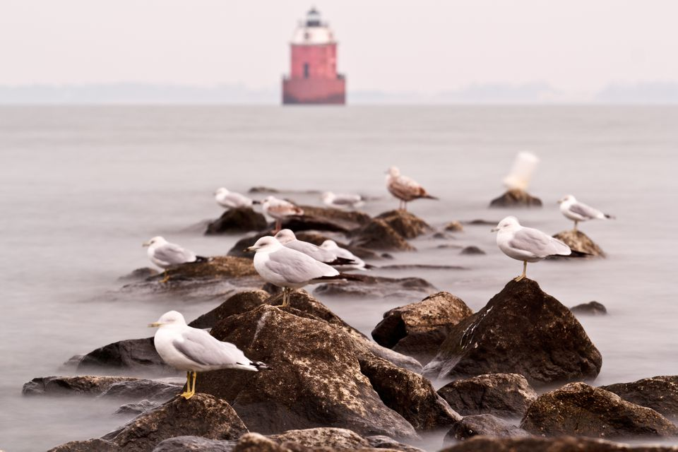 Seagulls perched on rocks in front of lighthouse at Sandy Point State Park