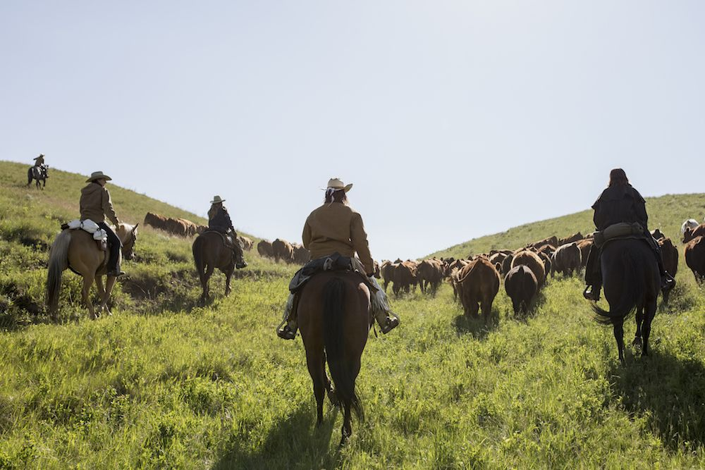 On a cattle drive in Montana
