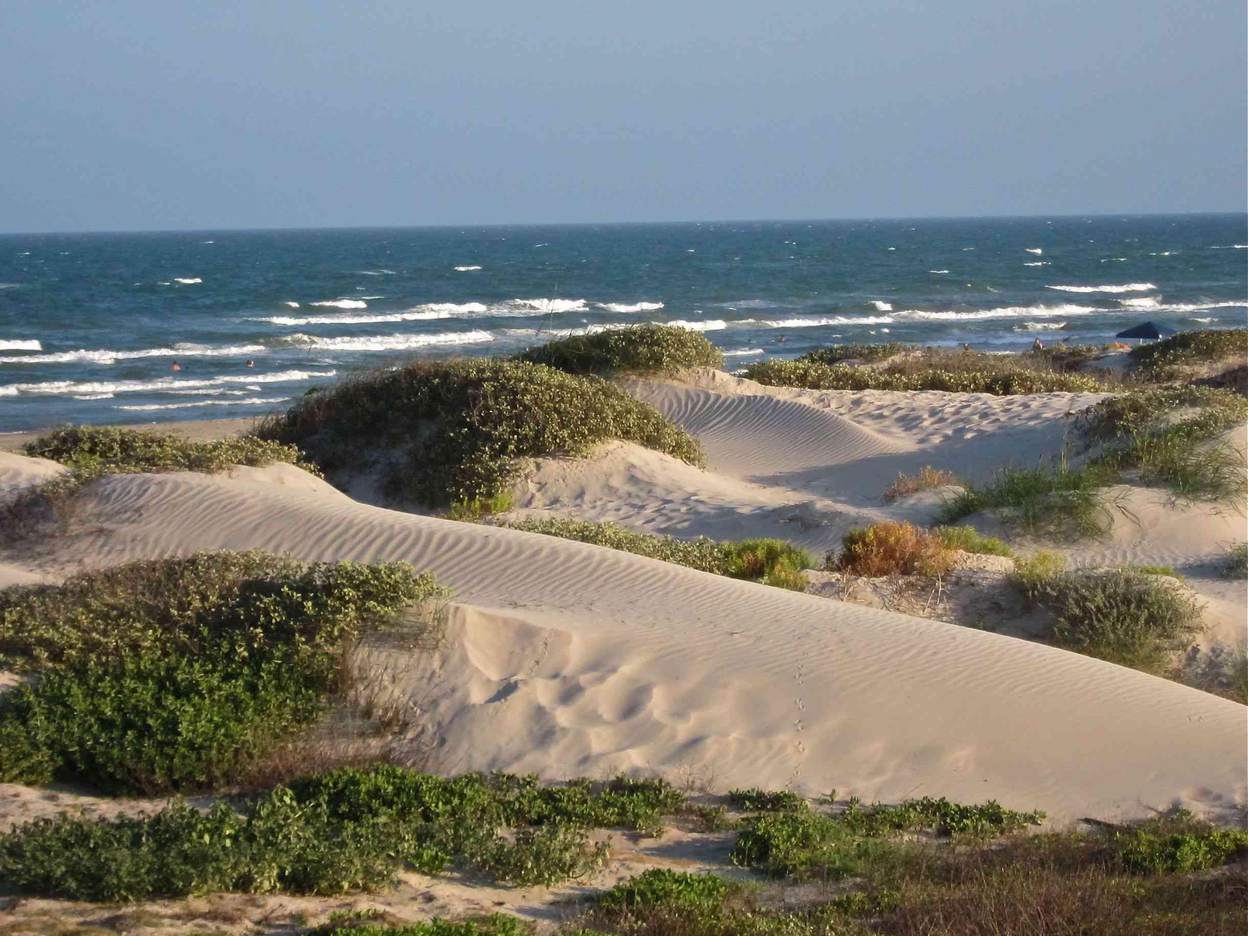 Sand dunes at Padre Island National Seashore