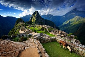 Llama standing by stone steps leading up from old ruins of Machu Picchu, Peru, spring evening