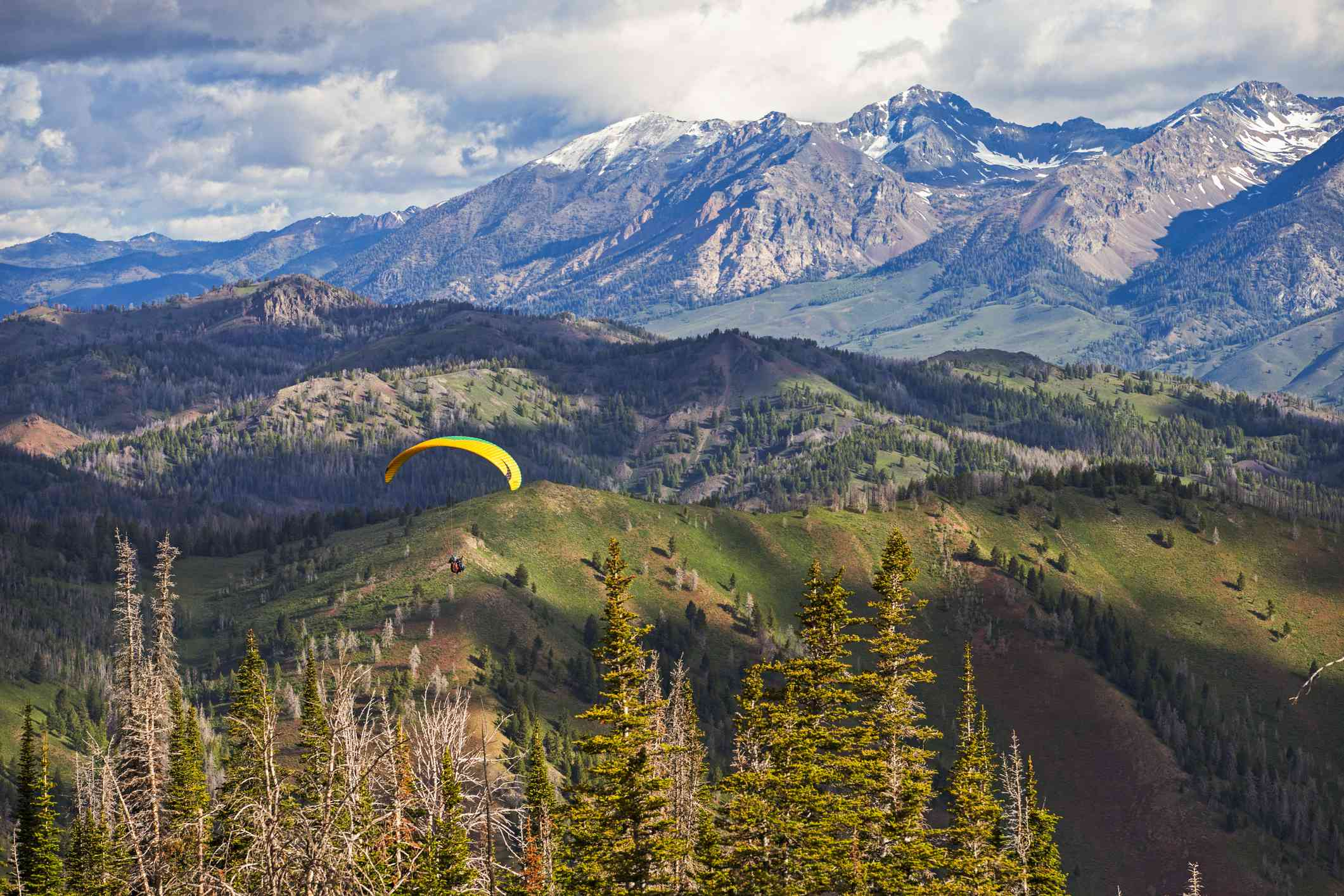 mountain landscape with pine trees and paraglider in foreground