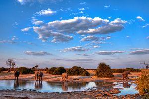 Elephants near water hole in Chobe, Botswana.