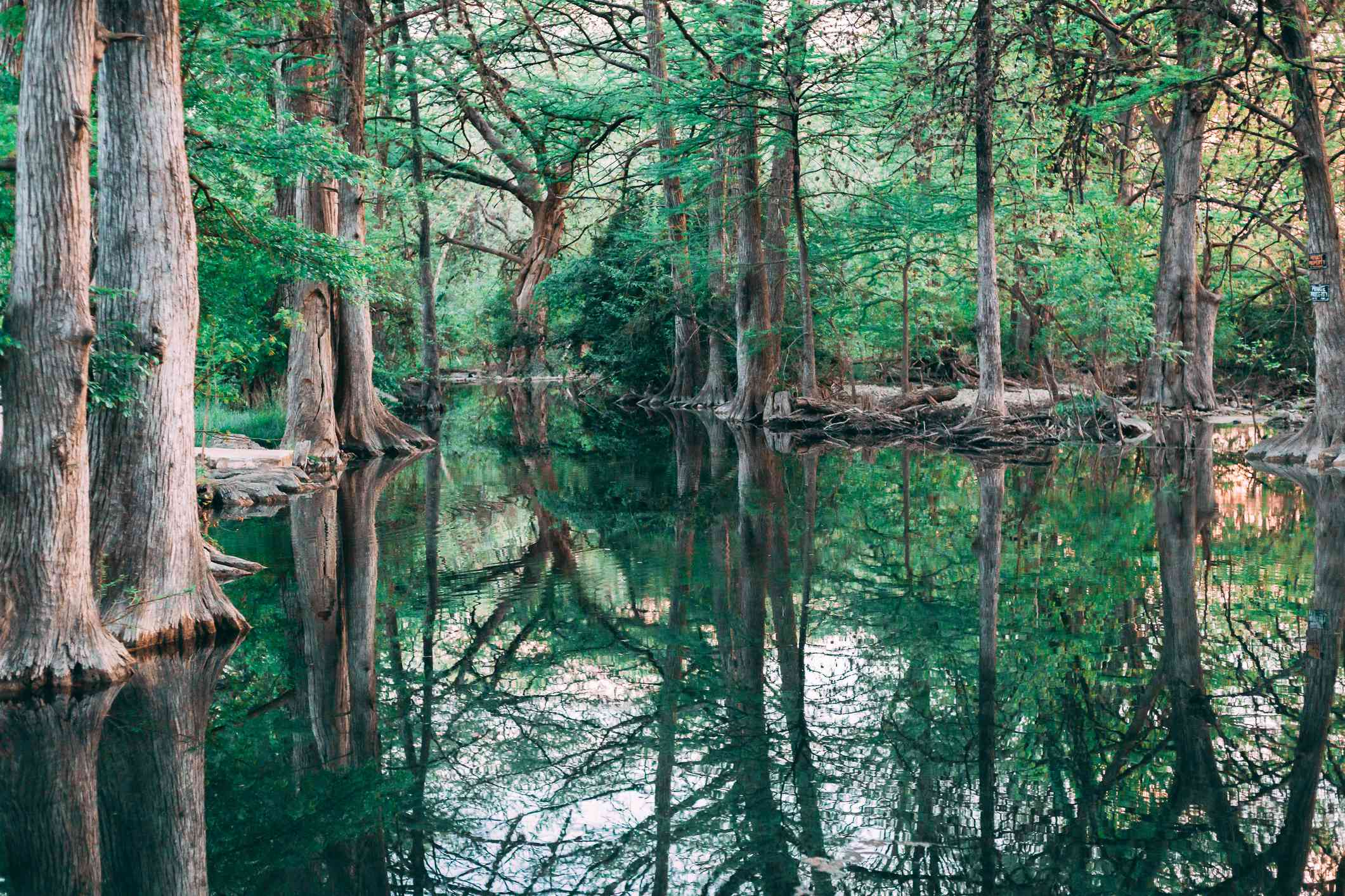 Blue Hole Regional Park, Wimberley Texas