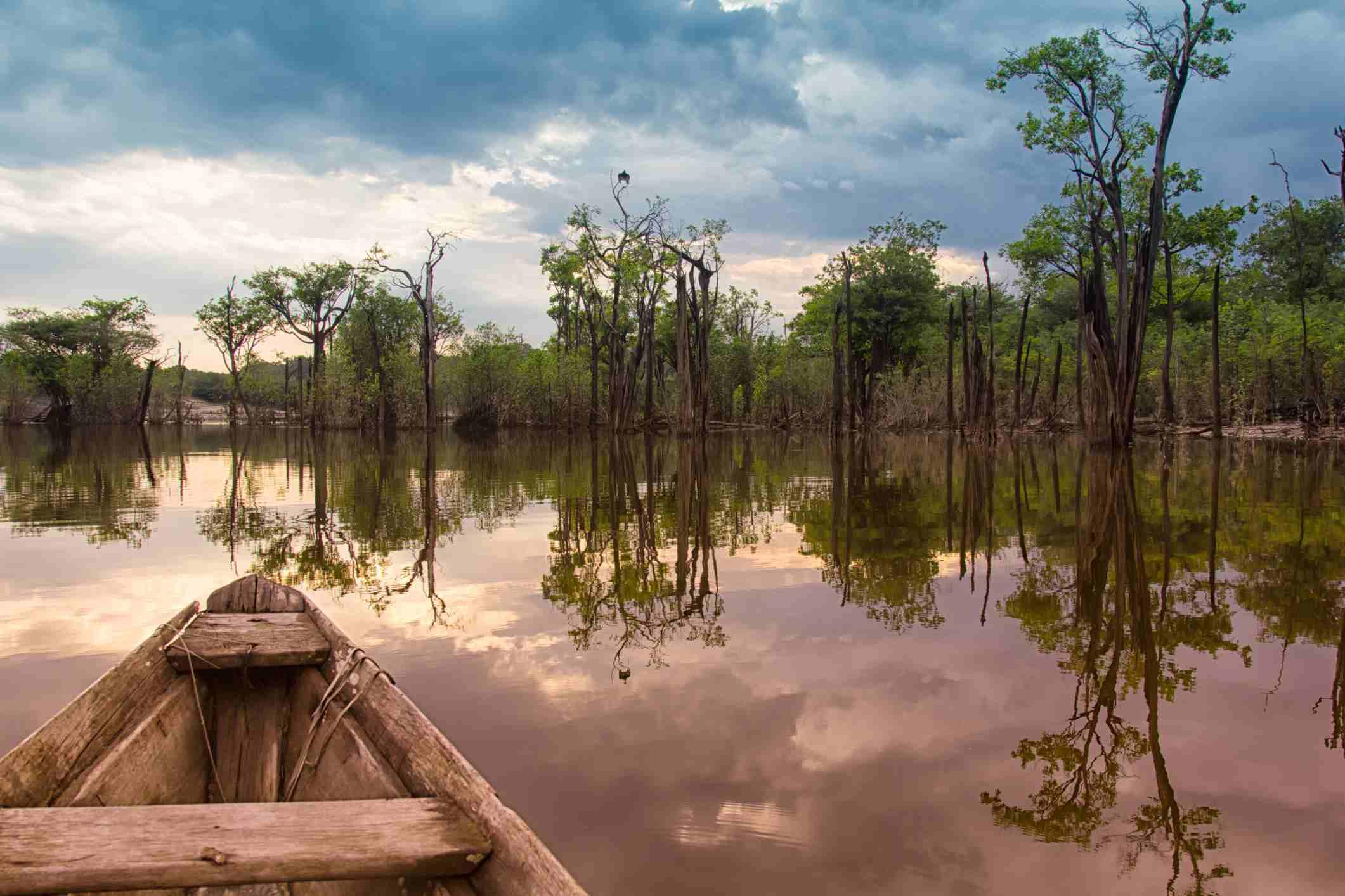 Sailing in the Amazon jungle.