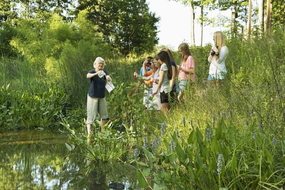 Teacher and students collecting water specimen in wetland
