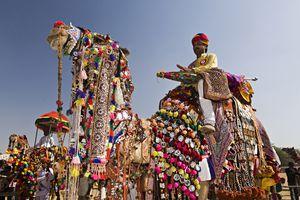 Decorated camel at the Pushkar Fair.