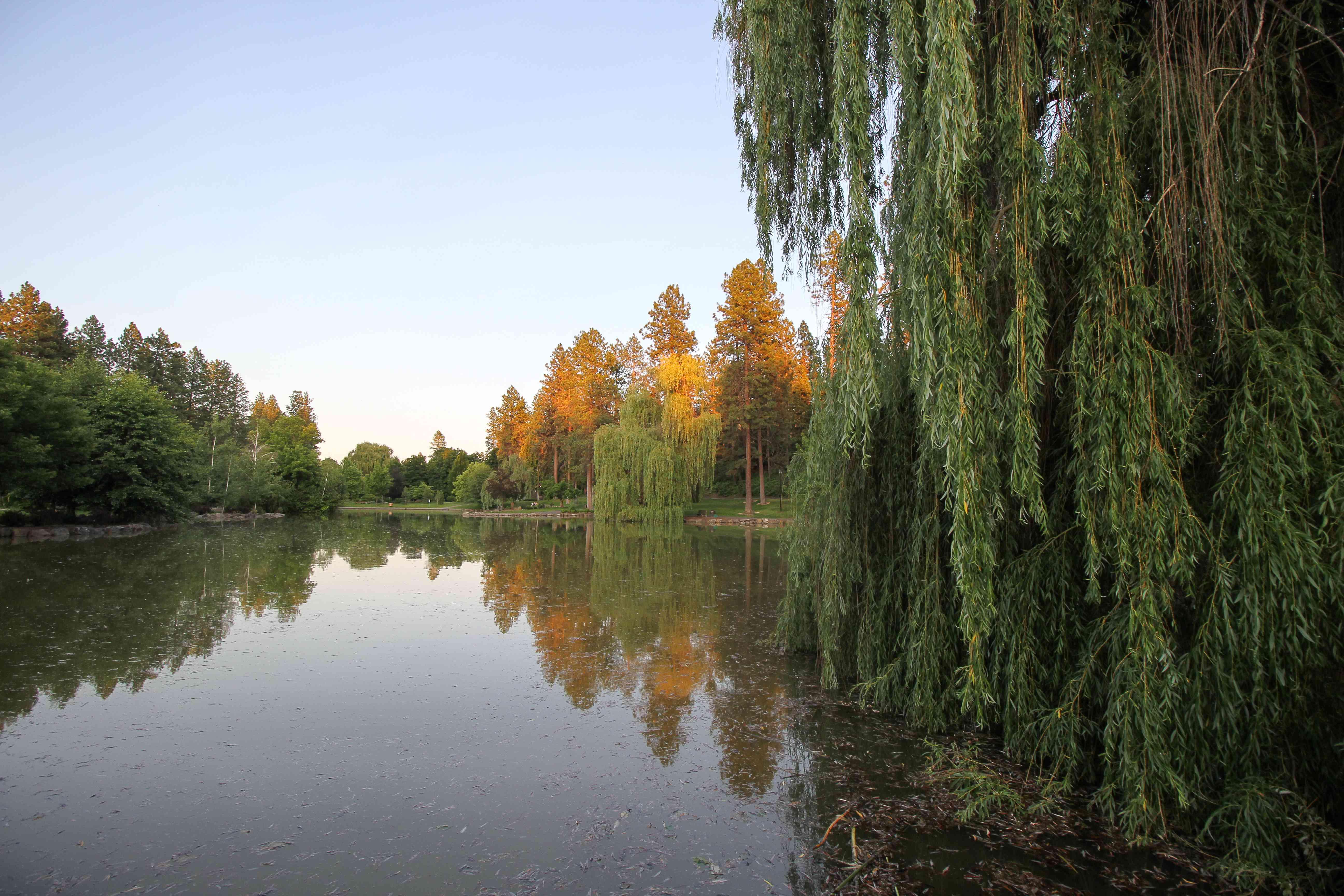 Árboles alrededor de un lago durante la puesta de sol
