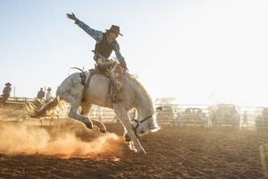 A bucking horse at a rodeo in central Queensland, Australia.