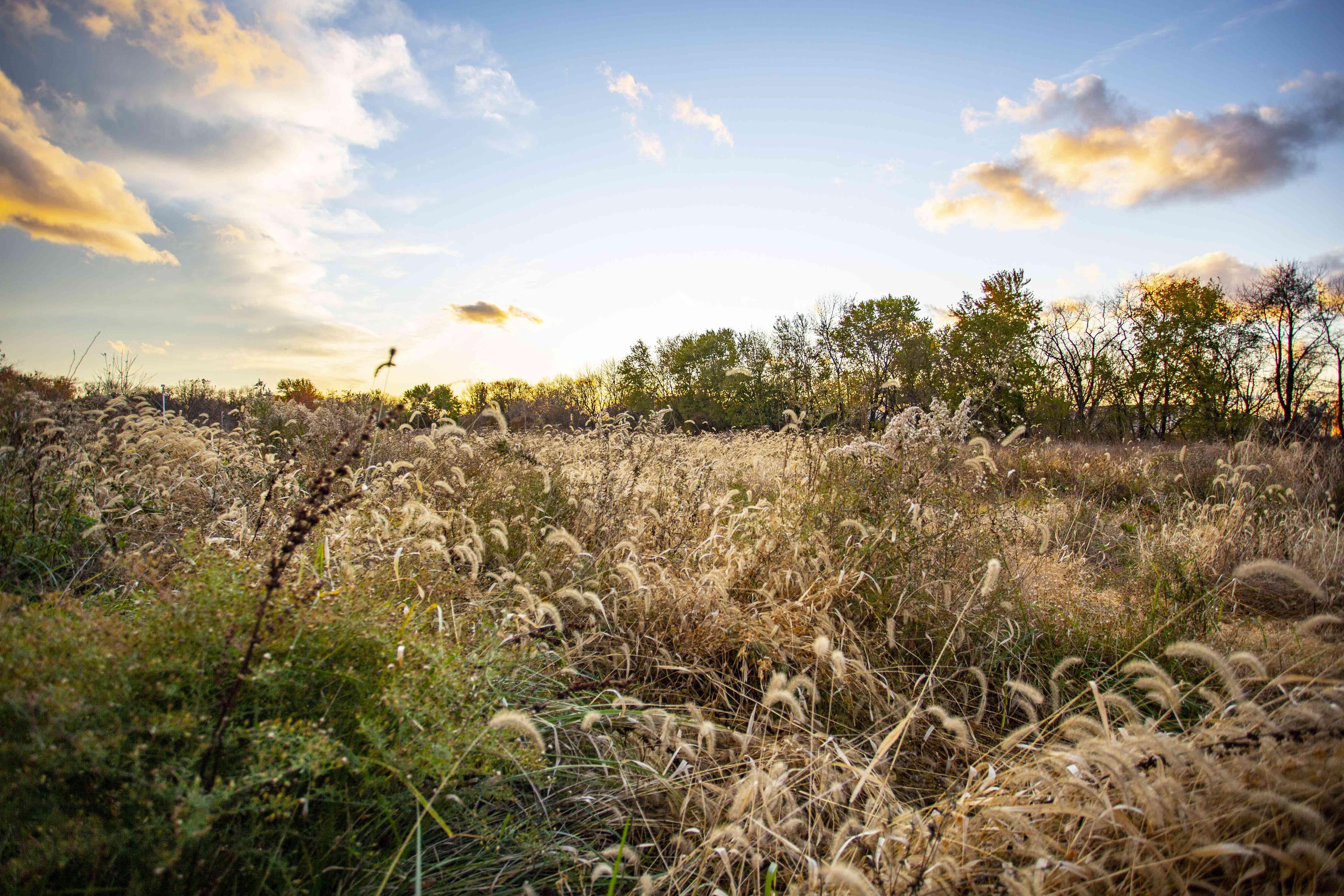 A grassy field during sunset in John Heinz National Park