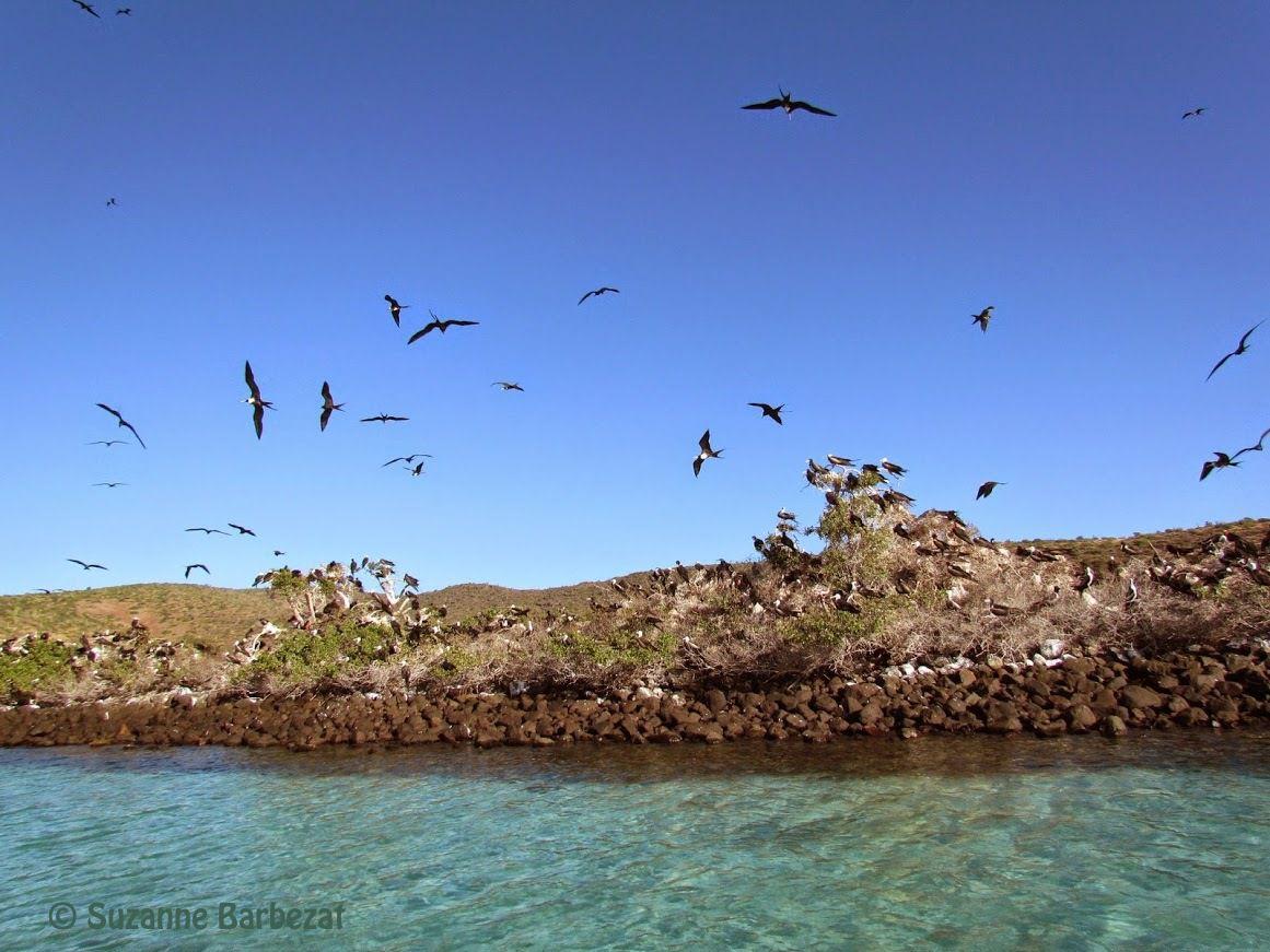 Isla Espiritu Santo, BCS