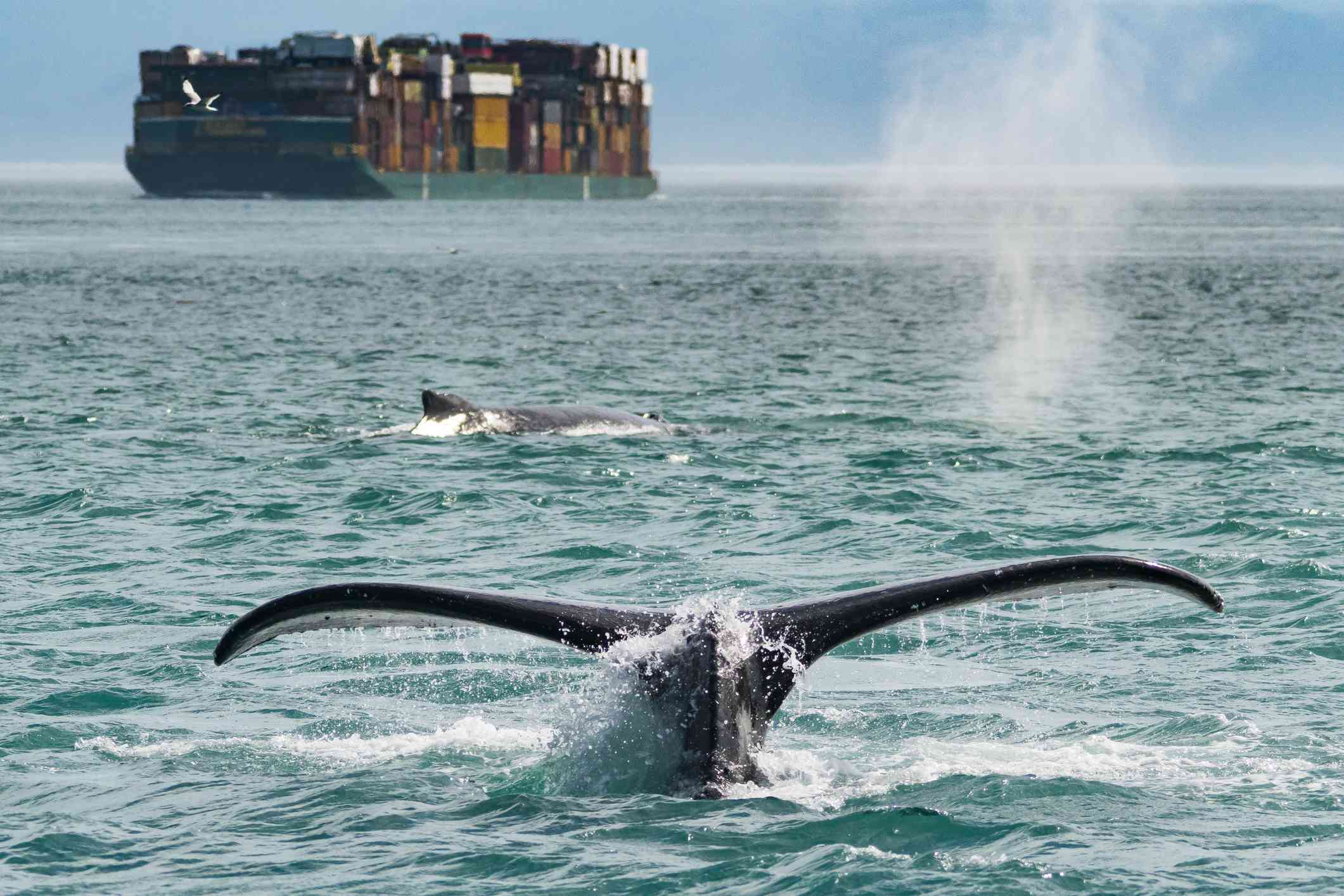 Scenic View Of A Whale Fluke in Juneau