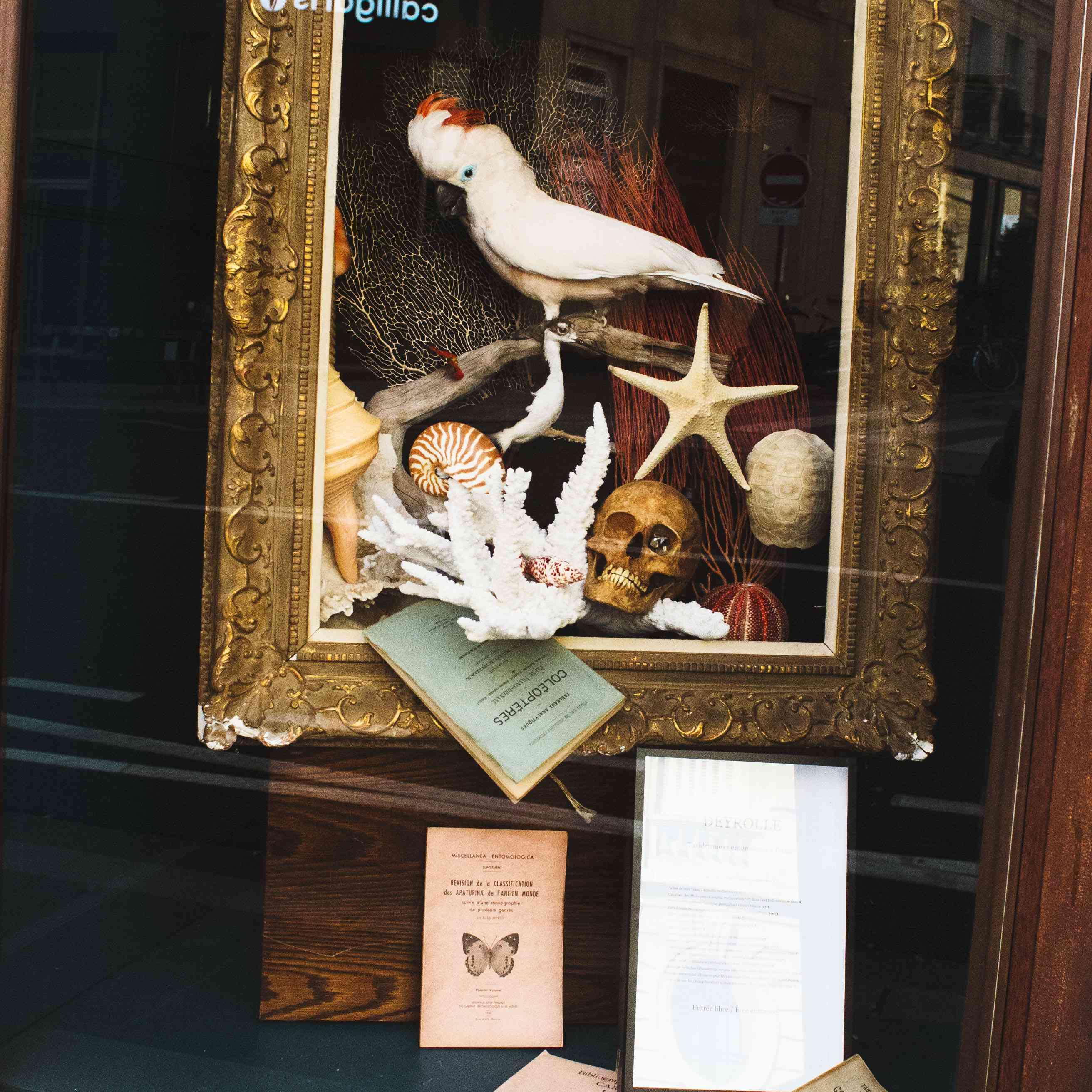 A taxidermy cockatoo in a window display at Deyrolle
