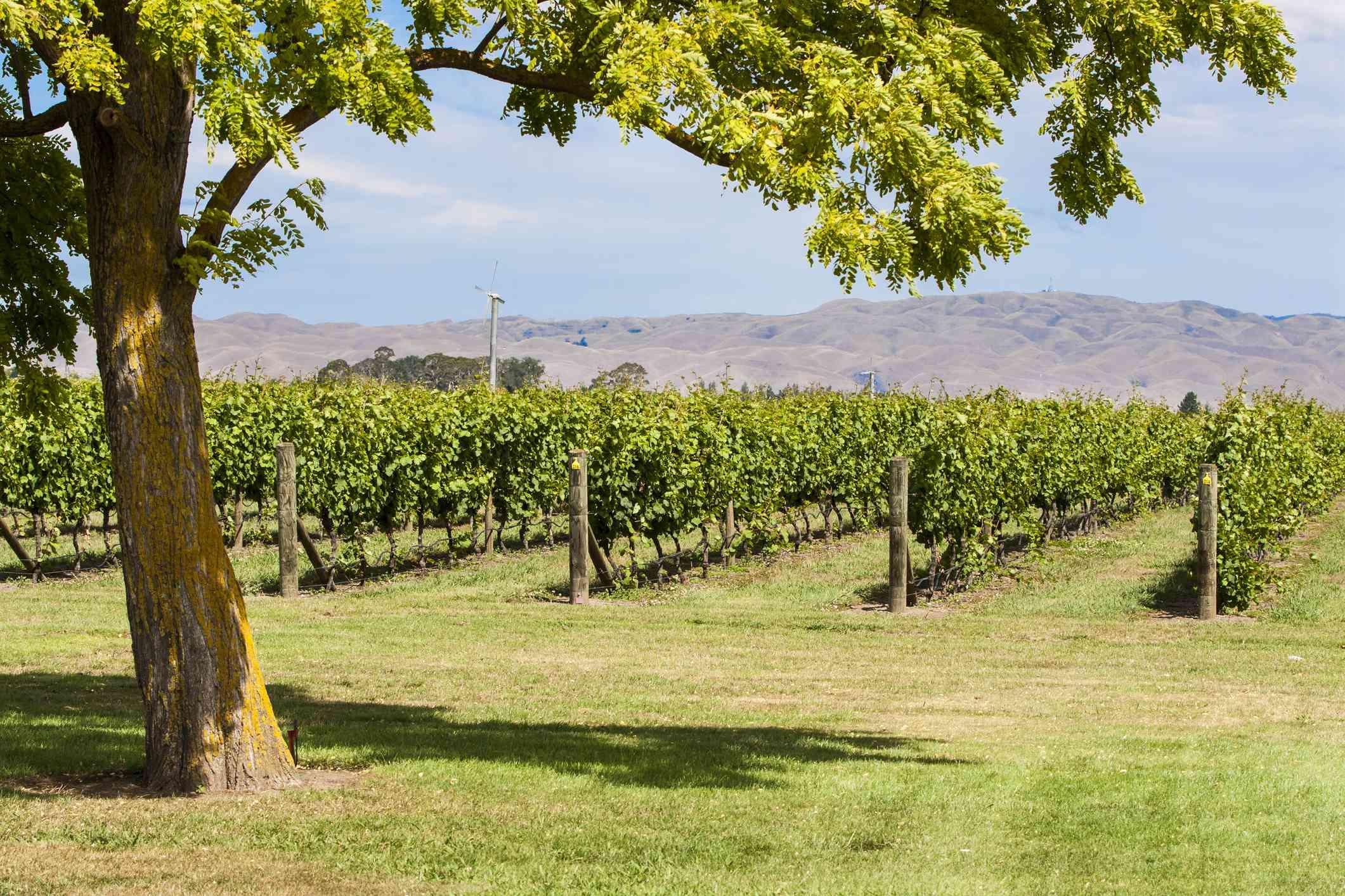 Vineyards of Hawke's Bay. Photo: Scotty Robson/Getty