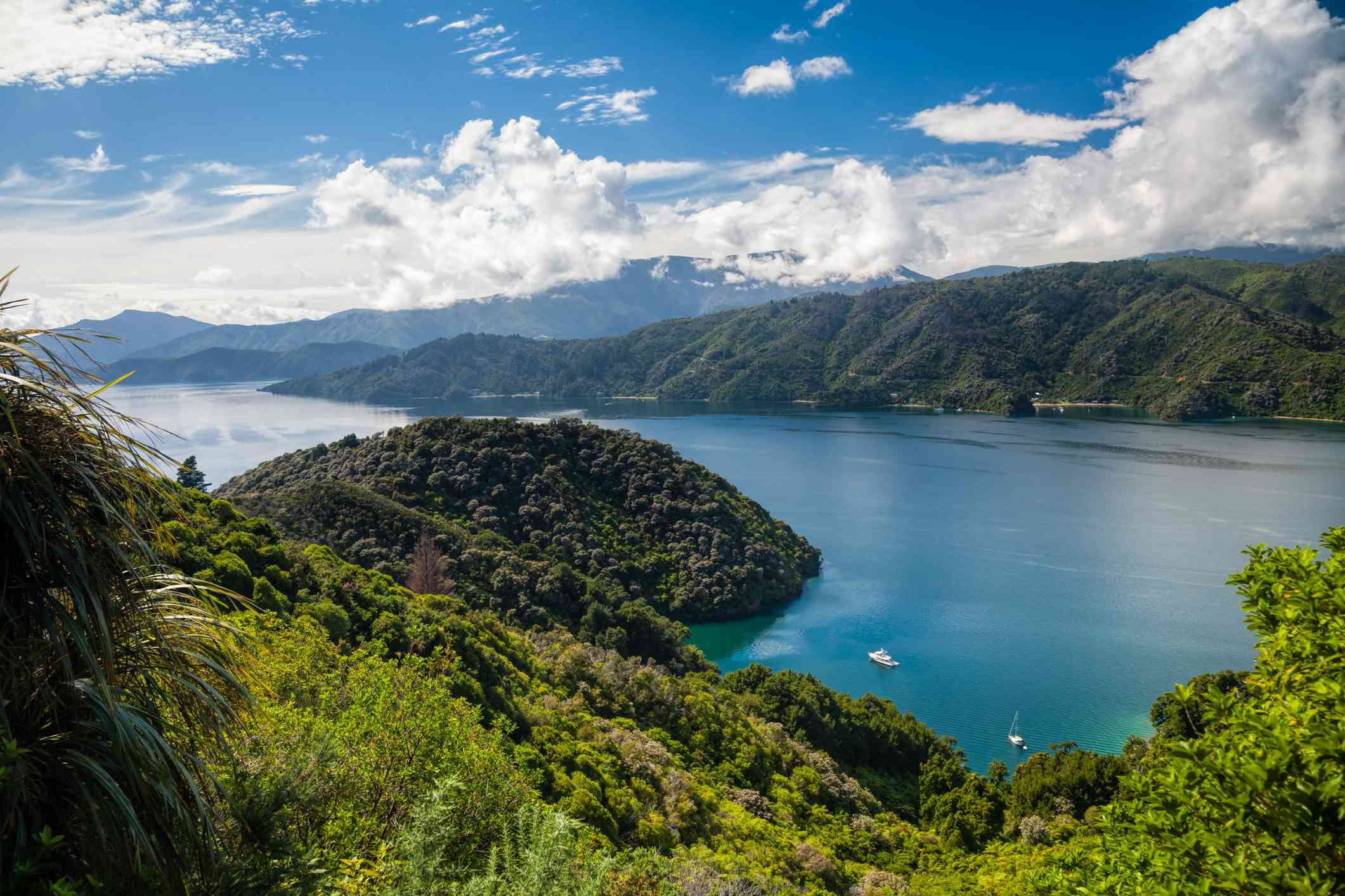 blue water and forest-covered hills in the Marlborough Sounds