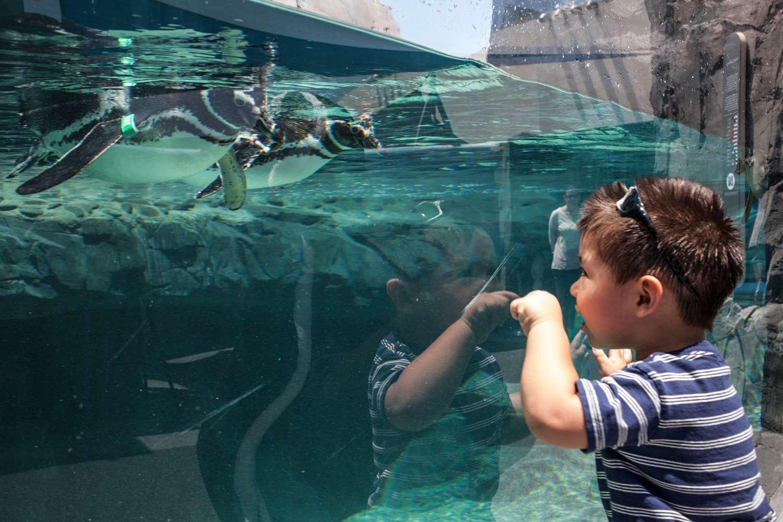 Penguin Exhibit at the Aquarium of the Pacific