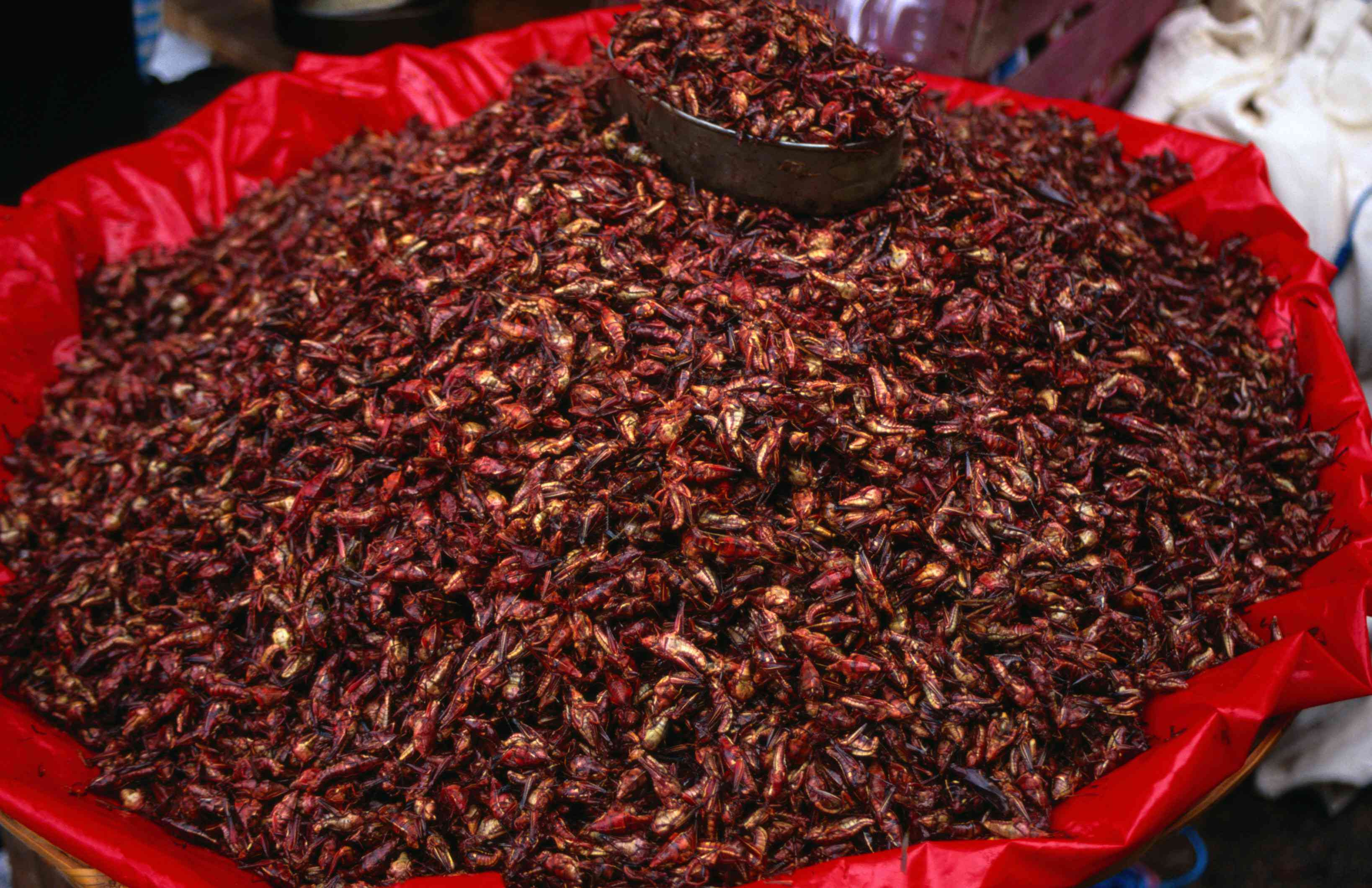A large container of chapulines (fried grasshoppers) for sale at the Oaxaca market