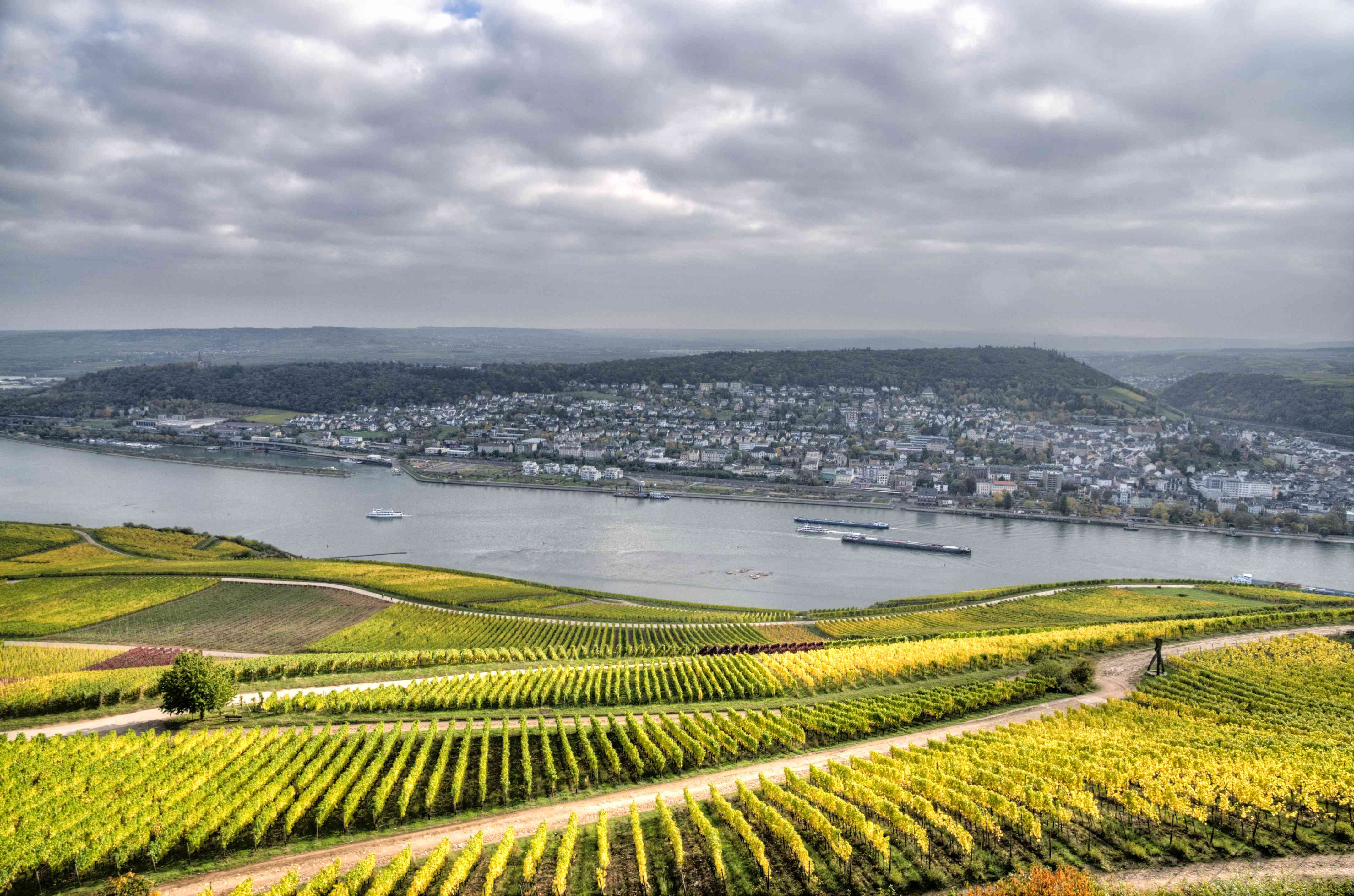 green vineyards with the Rhine river and mainz city in the distance