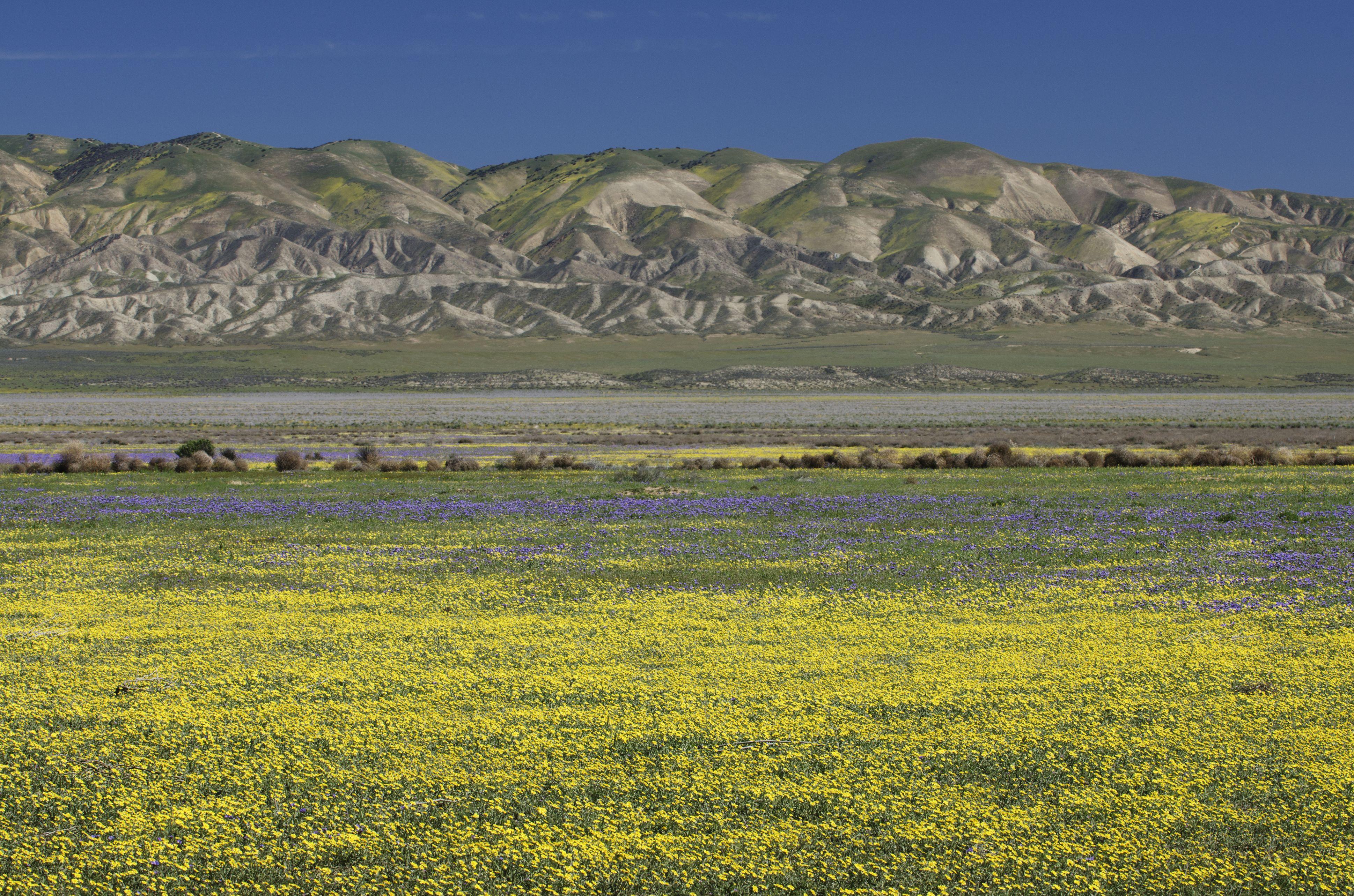 Carrizo Plains National Monument, California