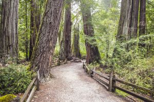 Redwood trail at Big Basin State Park