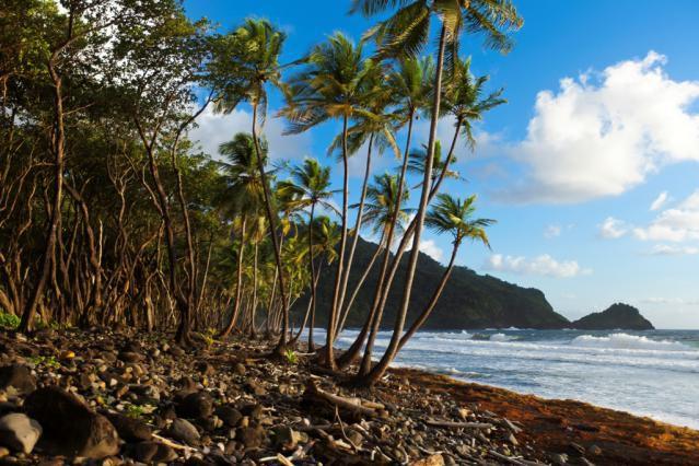 Rosalie-Bay-Beach-shore-resized.jpg