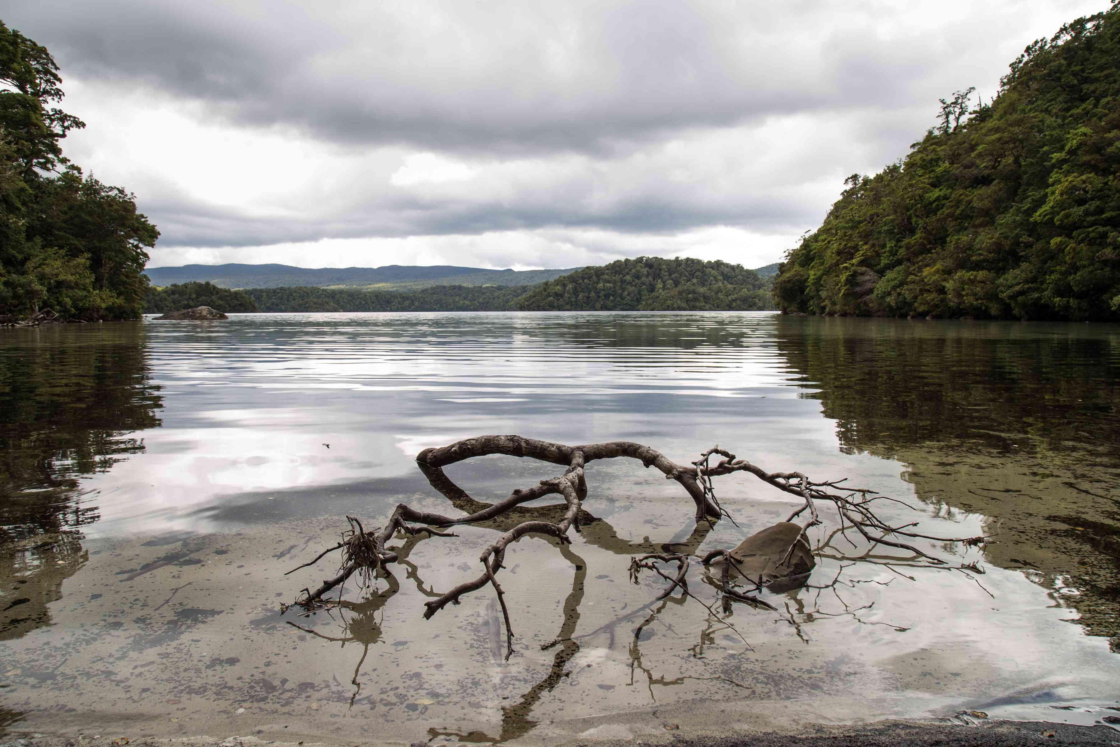 tranquilo y tranquilo lago en un día nublado y sombrío con el tronco de un árbol en el agua, el lago Waikareiti