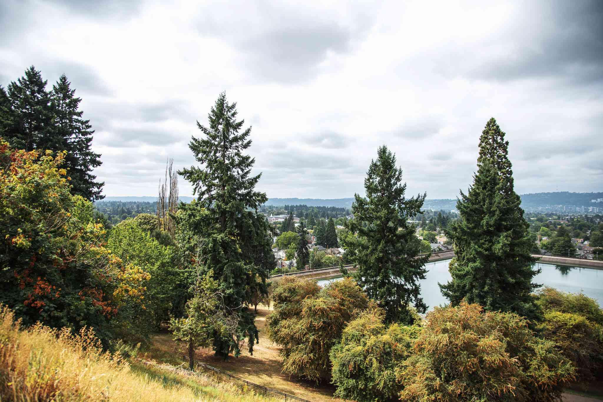 Árboles y una vista de Portland desde el Parque Mt Tabor