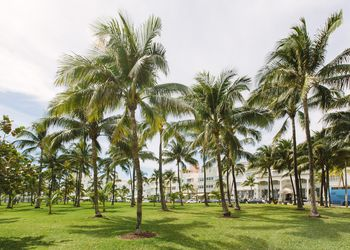 Palm trees in Lummus park in South Beach, Miami, Florida, USA