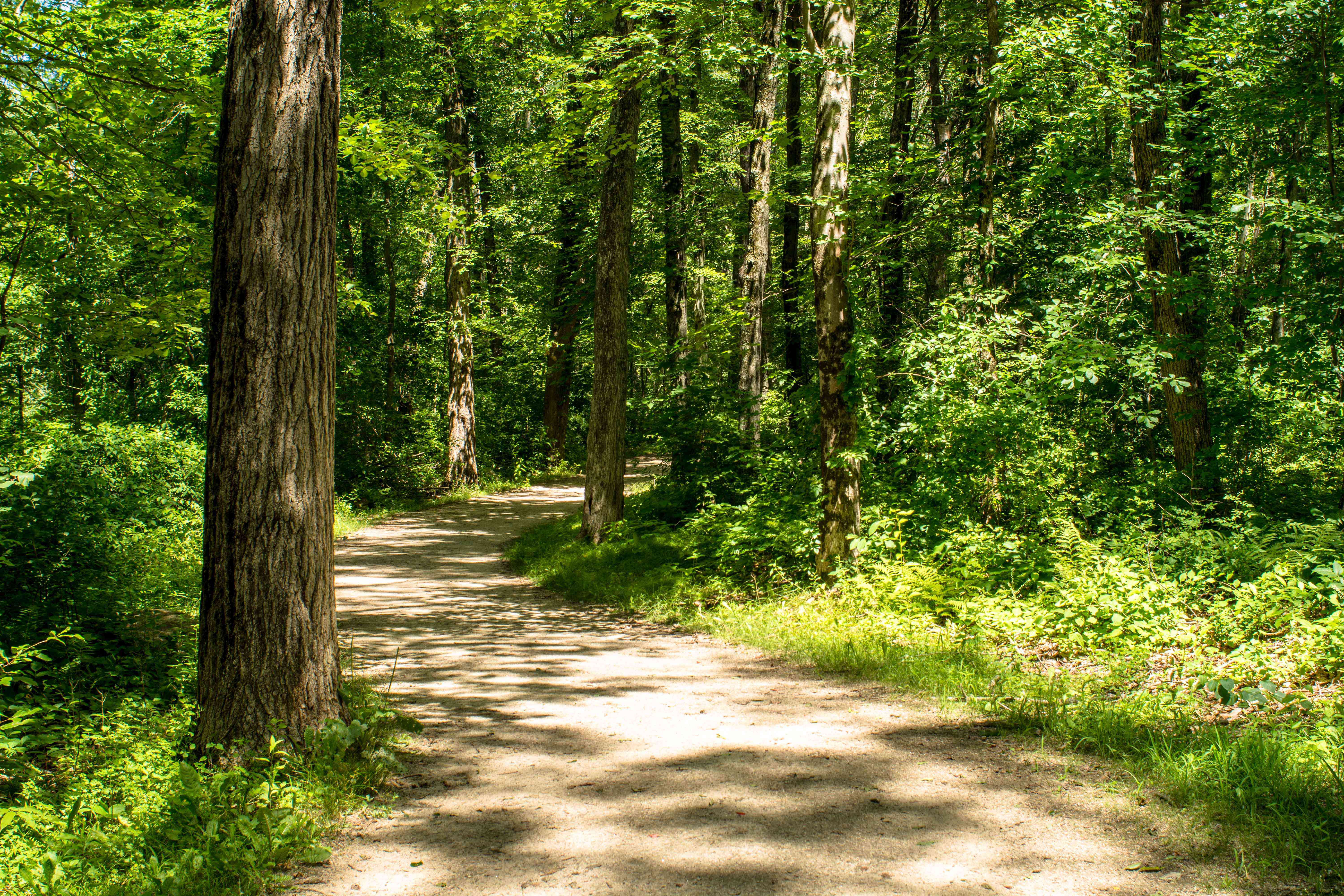 Natural Trail in Forest Ground Path